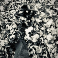 Kicking leaves – the best part of autumn